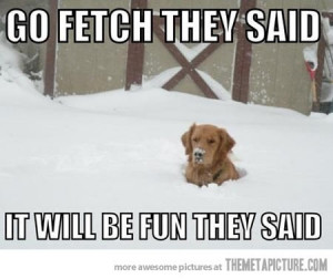 Go fetch, they said; it will be fun, they said.
