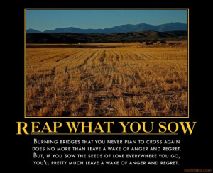 uncategorized motivation proverbs reaping sowing you reap what you sow
