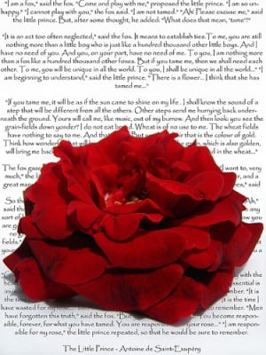 The Little Prince -- poem love text intense flower quote red rose ...