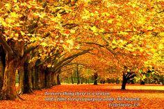 Art Prints Fall Tree Scene Bible Verse Photo Colorful Print Decor fall ...