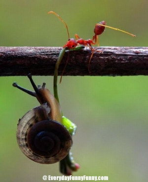 ... funny animals funny picture funny teamwork great teamwork teamwork