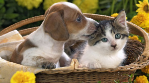 Puppy And Kitten - 1920x1080 - 16:9