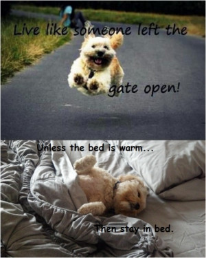 Live like somebody left the gate open!