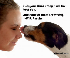 ... the best dog. And none of them are wrong. :) Our dogs are priceless