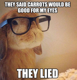 lols . 25 Best Funny animal Quotes and Funny Memes