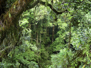 ... two types of rainforest tropical rainforest and temperate rainforest