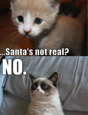 Funny-Cats-Top-49-Most-Funniest-Grumpy-Cat-Quotes-6