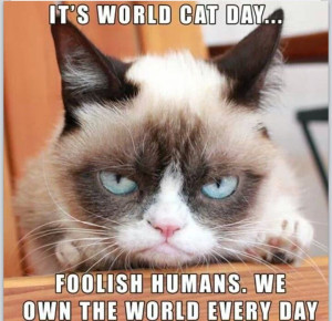 Grumpy Cat Work