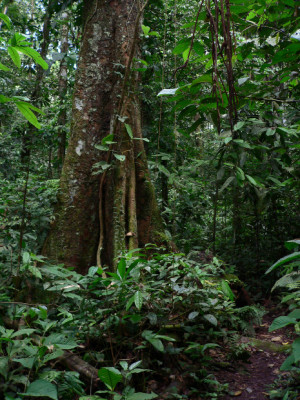 Search Results for: Ecuador Amazon Rainforest
