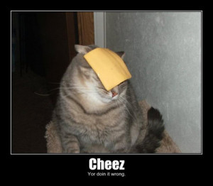 Cat Cheese Doing it Wrong