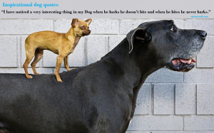 Animal Quotes Inspirational Dog quotes