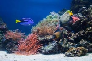 Underwater Ocean Plants Into the atlantic ocean.
