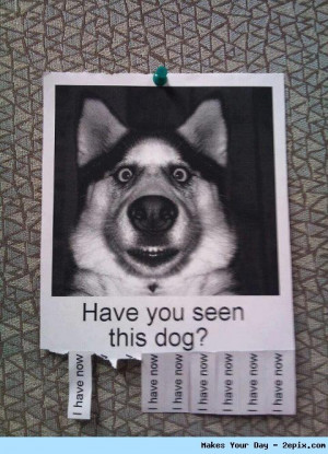 Here are few Funny Animal Photos and Funniest Memes that will surely ...