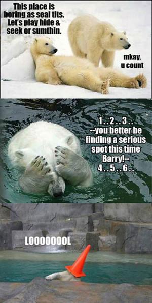 Polar bear fun