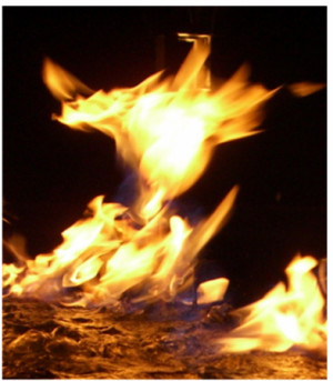 Phoenix Rising, the mythical bird that rises from the ashes of death ...