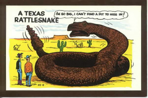 postcards u s views texas unclassified 46810 texas rattlesnack funny ...