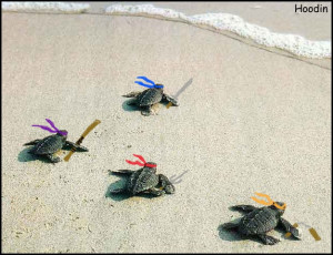 CourtneyGirl babay ninja turtles exept there not sea turtles ...