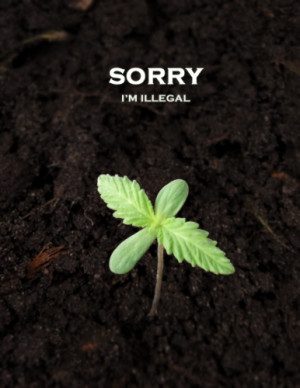 Sorry, I'm Illegal [pic] / I Love Weed