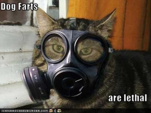 dog farts are lethal