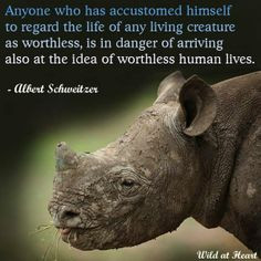 schweitzer quotes animal rights quotes boards animal cruelty famous ...