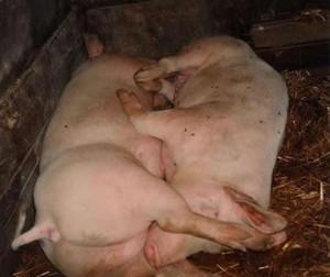 Discussion: [Choquant] Un 69 trop cochon !