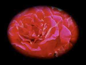 File Name : flowervignette.jpg Resolution : 640 x 482 pixel Image Type ...