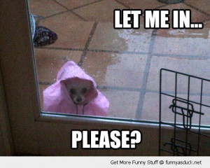 please let me in dog animal raincoat outside rain funny pics pictures ...