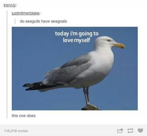 Funny Beach Photos Seagulls