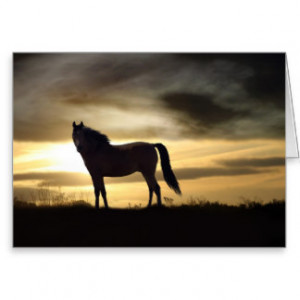Horse Sympathy Cards And More