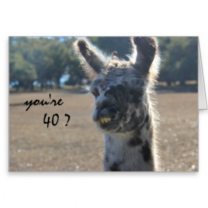 Funny Llama Birthday, 40th, Over the Hill Greeting Card