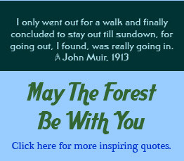 Positive Environmental Awareness quotes and related quotes about ...