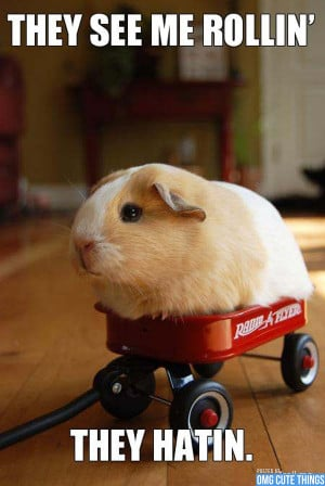 animal-memes-omg-cute-things-082712-04