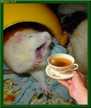 morning coffee animals funny pictures funpub net