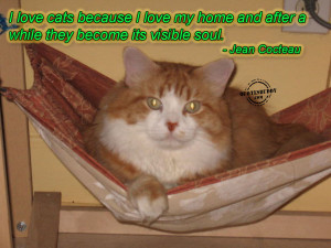 Quotes About Loving Your Cat http://www.quotesbuddy.com/quotes/cat ...