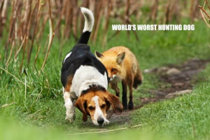 Worlds Worst Hunting Dog - Return to Funny Animal Pictures Home Page