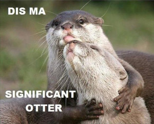 funny otter pictures