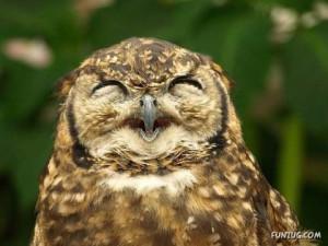 Fotos de Animales sonriendo