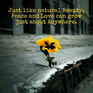 Just like natural beauty,peace and love can grow just about anywhere.