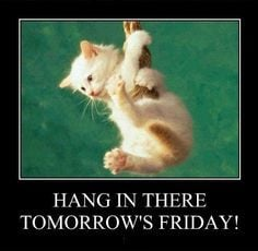... quote friday kitten days of the week thursday friday quotes thursday