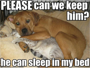 Funny Cats vs Dogs Dog Amp Cat