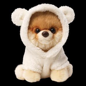 Boo The Teddy Bear Dog