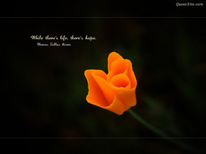 Beautiful flower with hop quotes wallpapers