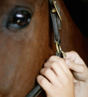 For the love of horses: Fun, soulful quotations from famous folks