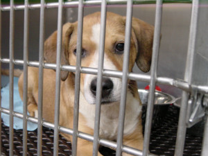 Homeless Pet Shelters