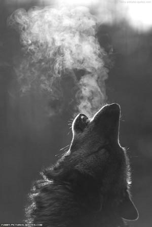 cool-wolf-howling-wolf-black-white.jpg