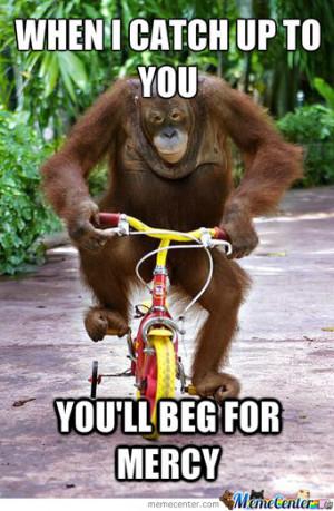 Funny Orangutan Quotes Funny orangutan quotes funny