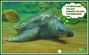 Funny-Turtle-Image (5)