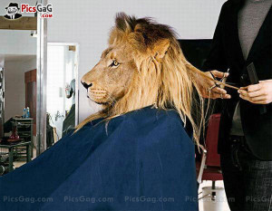 Lion Haircut Funny Style