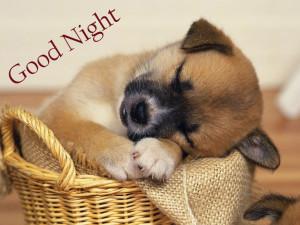 good-night-dog