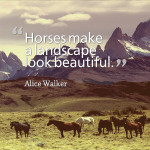 Top 20 Famous Horse Quotes and Sayings…